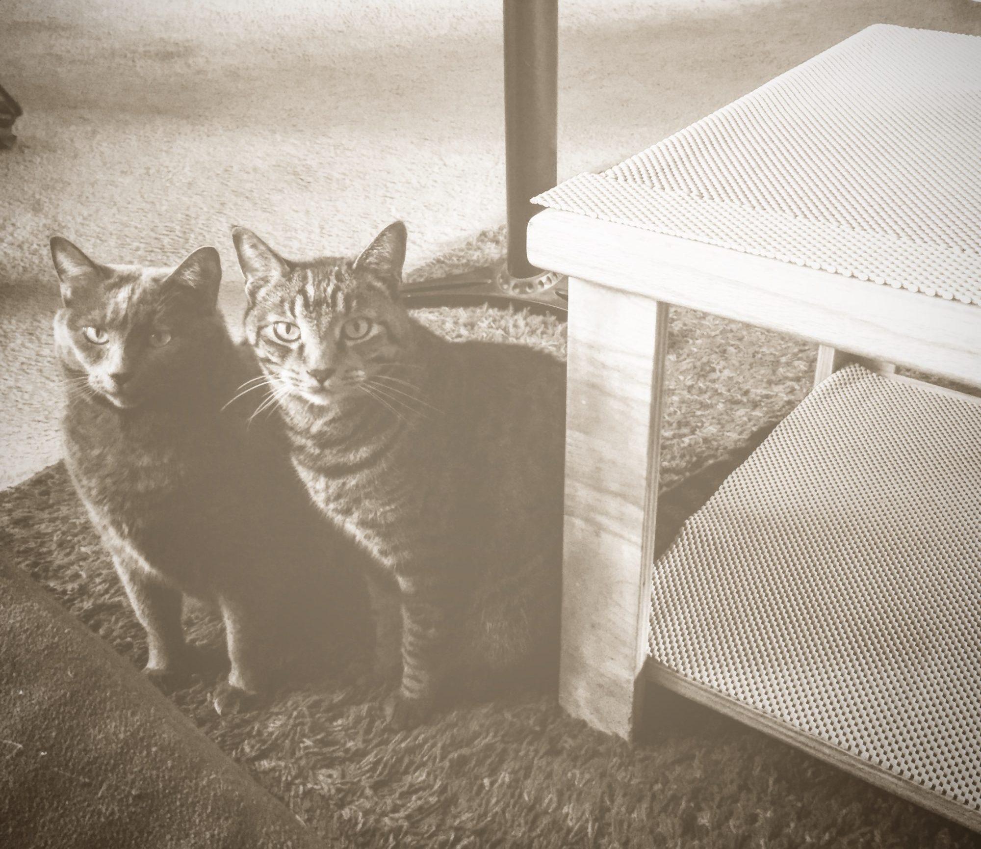 Cats Of TwoCat Studios In Tucson Arizona